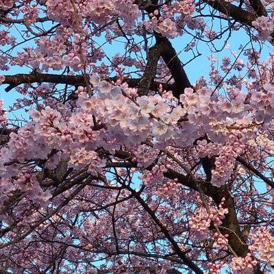 栃木県日光市に聖火がきました - 八興ハウス - ブログ